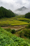 Rice field terraces of Youtsuya village, Japan Royalty Free Stock Images