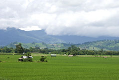 Rice field in Thailand Stock Image