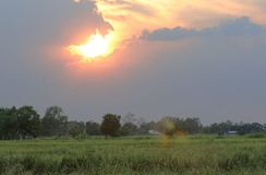 Rice field in Thailand. Rice field in Thailand In the evening Royalty Free Stock Images