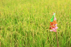Rice field. Thailand pray respect to the rice field because is the main product and we do this from past to now Royalty Free Stock Photos