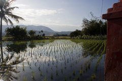 Rice Field and tropical countryside Stock Photos