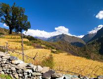 Rice field under Dhaulagiri Himal Royalty Free Stock Photography