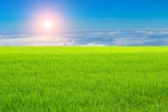 Rice field under the sky Royalty Free Stock Photos