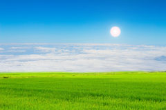 Rice field under the sky Royalty Free Stock Photo