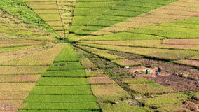 Rice field uniquely shaped Stock Image