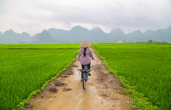 Rice field in valley around with mountain panorama view in Bac Son valley, Lang Son, Vietnam. Rice field in valley around with mountain panorama view in Bac Son Royalty Free Stock Photo