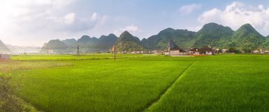 Rice field in valley around with mountain panorama view in Bac Son valley, Lang Son, Vietnam. Rice field in valley around with mountain panorama view in Bac Son Stock Photo
