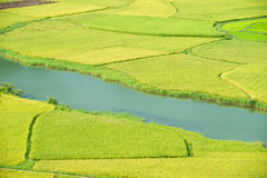 Rice field in Vietnam Royalty Free Stock Photos