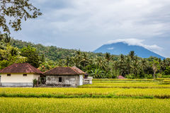 Rice field with a view of Mount Agung, Bali Island, Indonesia stock images