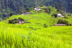 Rice field and village in Annapurna nountains Royalty Free Stock Image