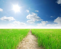 Rice field way. On the green field background cloud cloudy royalty free stock photos