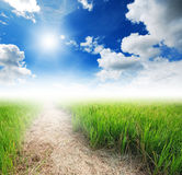 Rice field way on the green field background Royalty Free Stock Photography