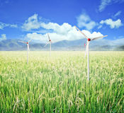 Rice field and wind turbines. Stock Photo