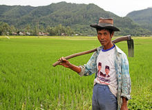 Rice Field Worker in the Harau Valley in West Sumatra, Indonesia Royalty Free Stock Images