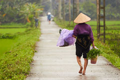 Rice Field worker walking home Stock Photo