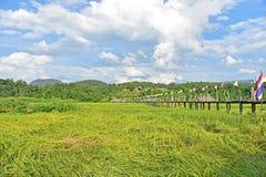 Rice field at Zutongpae Bridge Royalty Free Stock Photography