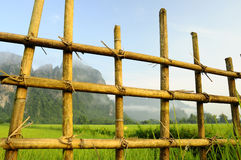 Rice Fields Stock Image