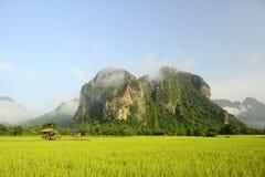 Rice fields Royalty Free Stock Photo