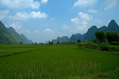 Rice Fields. Yangshuo, China stock images