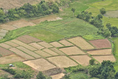 Rice fields. In country of Thailand Stock Photo