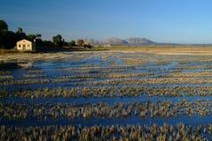 Rice Fields. In Catalonia, Spain Stock Photo