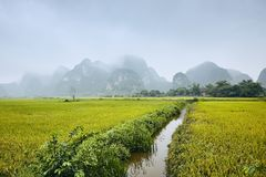 Rice fields against karst mountains stock images