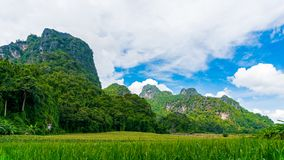Rice fields amidst limestone mountains. Rice fields amidst limestone mountains with white cloud and blue sky. Concepts of agricultural stock photo