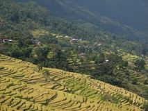 Rice fields in the Annapurna Conservation Area Stock Images