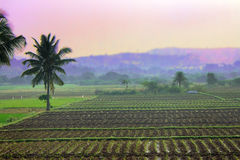 Rice fields in Asia Stock Photography