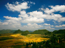 Rice Fields in Autumn Royalty Free Stock Photography