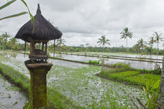 Rice fields in Bali. View of rice fields with small shrine in Bali, Indonesia Stock Images
