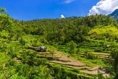 Rice fields - Bali island Indonesia Royalty Free Stock Images
