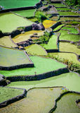 Rice fields in batad,philippines. Rice terraces in batad in the philippines mountains Royalty Free Stock Photos