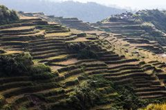 Rice fields are beautiful stock photography