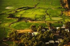Rice Fields, Cambodia Stock Photo