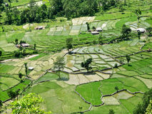 Rice fields, central Nepal Stock Photography