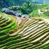 Rice fields in china - long-ji Stock Image