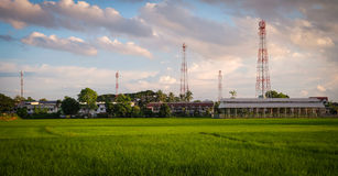 Rice fields countryside with antenna tower Stock Images