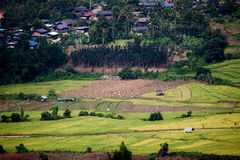 Rice fields in the countryside Stock Photo