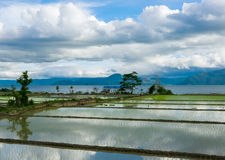 Rice fields covered with water and reflections of clouds. Stock Image