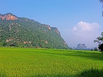 Rice fields on day time Royalty Free Stock Photo