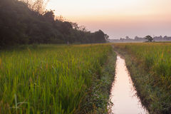 Rice fields at dusk, Nepal Royalty Free Stock Photos