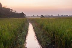 Rice fields at dusk, Nepal Stock Photography