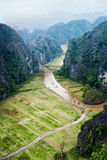 Rice fields in the early morning at Tam Coc, Ninh Binh, Vietnam Royalty Free Stock Photo