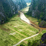 Rice fields in the early morning at Tam Coc, Ninh Binh, Vietnam Royalty Free Stock Images