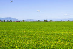 Rice fields at Ebro Delta Stock Images