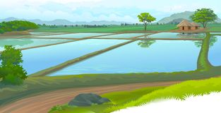 Rice fields and the farm house. A small hut on the meadows and a road next to the lawn Stock Photo