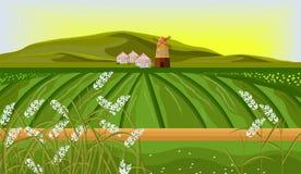 Rice fields farm landscape Vector. Sunshine background illustrations. Rice fields farm landscape Vector. Sunshine background illustration Stock Image