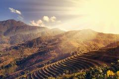 Rice fields farm landscapes. Stock Image