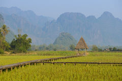 Rice fields farm at Laos Royalty Free Stock Photos